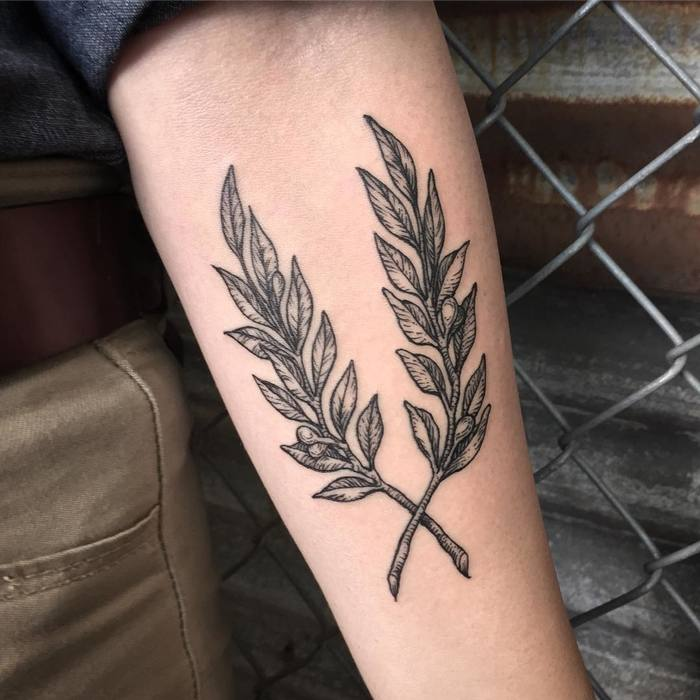 Crossed olive twigs tattoo on the forearm