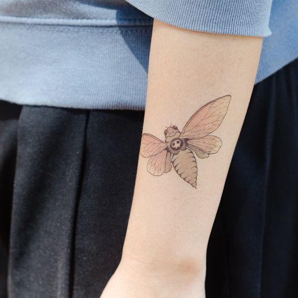 Delicate moth