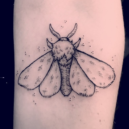 Outline black moth