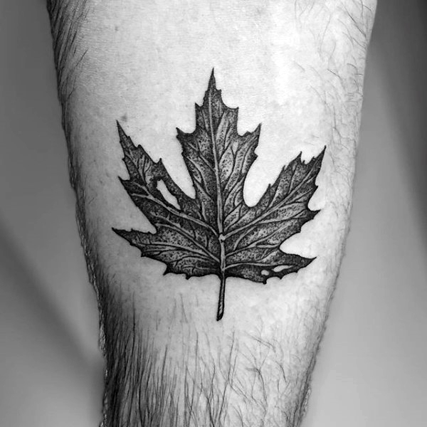 Detailed maple leaf