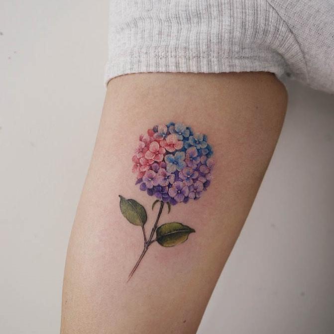 Triple-colore hortensia